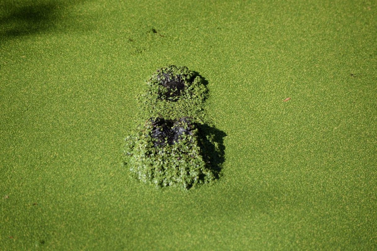 Can You Vacuum Algae Out of a Pool?